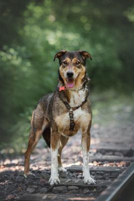 Собака Сири из приюта ищет дом Бирюлево