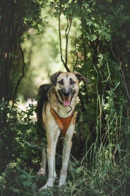 Взять собаку Лада из приюта Бирюлево в дар Бирюлево
