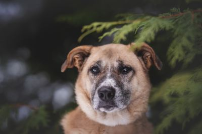 Взять собаку Лило из приюта Бирюлево