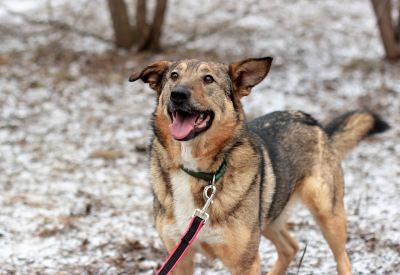 Взять собаку Джули из приюта Бирюлево