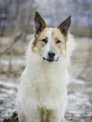 Собака Гек из приюта нашла дом Бирюлево