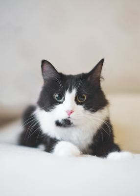 Взять кошку Маня из приюта Бирюлево в дар Бирюлево