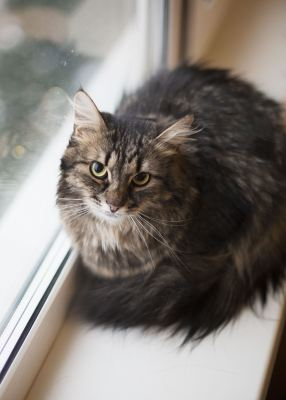 Взять кота Миша из приюта в добрые руки Бирюлево