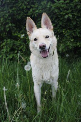 Собака из приюта Ленни ищет дом Бирюлево