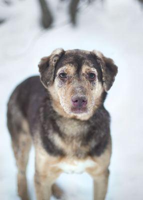 Взять собаку Тоффи из приюта Бирюлево