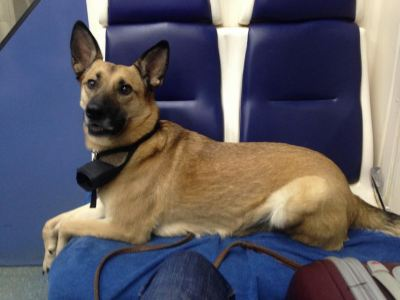 Собака Грета из приюта нашла дом Бирюлево