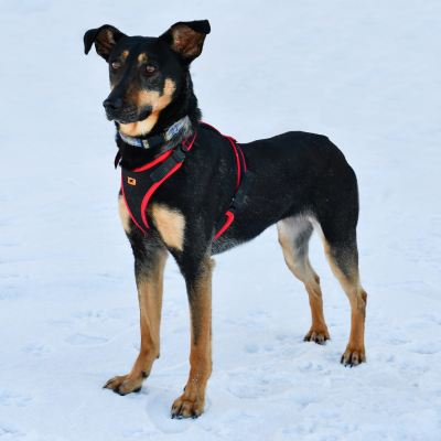 Взять собаку Джуди из приюта в дар Бирюлево
