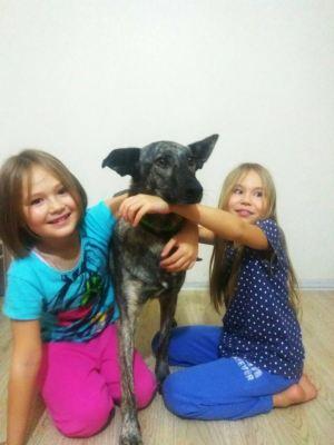 Собака из приюта Лея нашла дом! Бирюлево