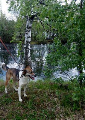 Собака из приюта Нора нашла дом Бирюлево