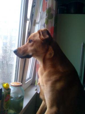 Собака из приюта Отто нашла дом Бирюлево