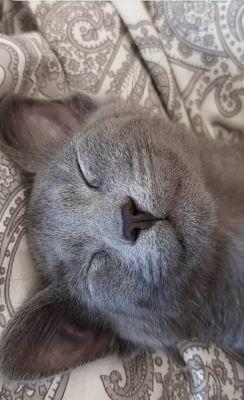 Котёнок Серый из приюта нашел дом Бирюлево