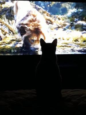 Кошка Симона из приюта Бирюлево нашла дом Бирюлево