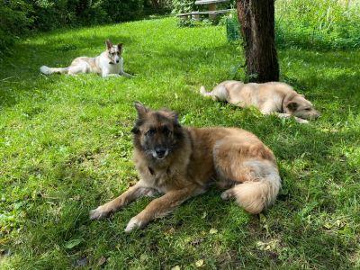 Собаки Мартин, Жужа и Антей из приюта нашли дом! Бирюлево