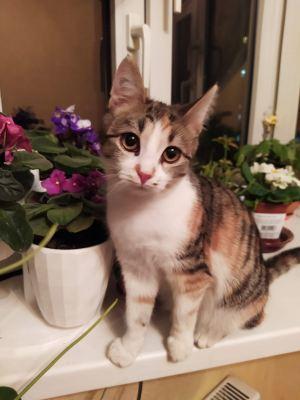 Котенок Ася из приюта Бирюлево нашел дом Бирюлево
