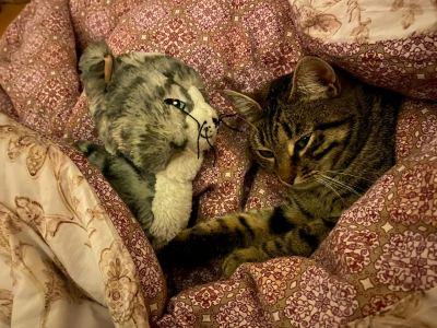 Кошка Ася из приюта Бирюлево нашла дом Бирюлево