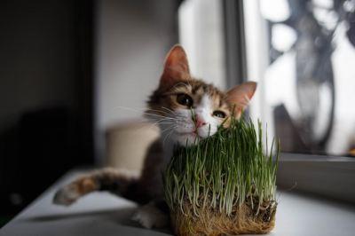 Кошка Цирилла из приюта нашла дом Бирюлево