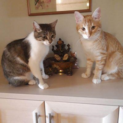 Котята Булочка, Лапик и Риса из приюта нашли хозяев Бирюлево