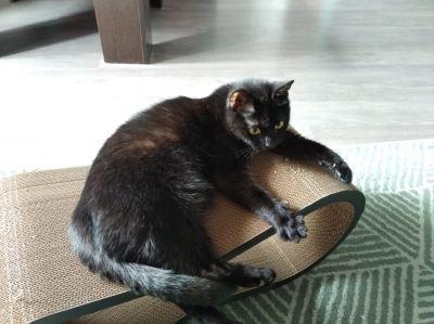 Кошка Шакира из приюта нашла дом Бирюлево