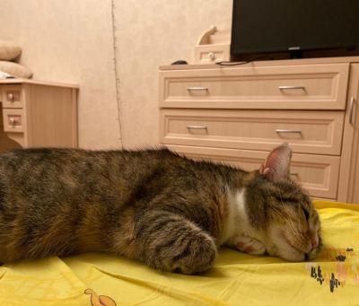 Кошка Софи из приюта нашла хозяина Бирюлево