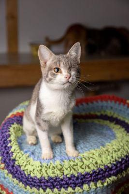 Взять кошку Стеша  из приюта в дар Бирюлево