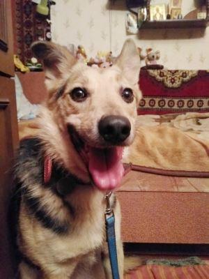 Собака из приюта Эйли нашла дом Бирюлево