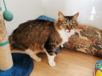 Взять кошку Лисичка из приюта Бирюлево