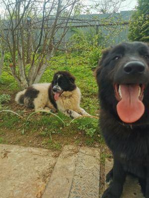 Щенки Шон и Макс из приюта Бирюлево нашли дом Бирюлево