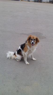 Взять собаку Бетти из приюта Бирюлево