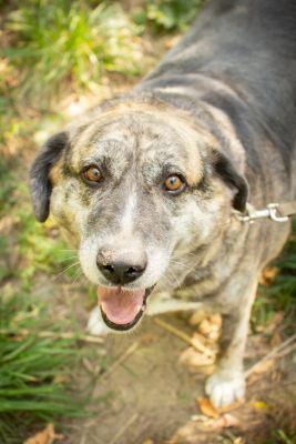 Взять собаку Чапа из приюта Бирюлево