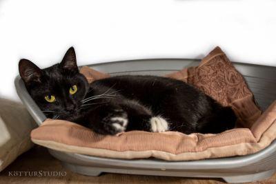 Взять кошку по имени Уголя из приюта Бирюлево