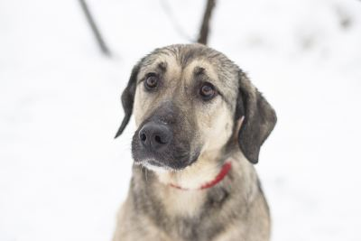 Взять собаку Тори из приюта в добрые руки Бирюлево