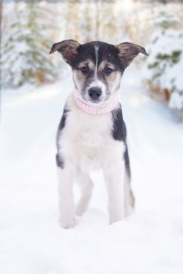 Взять щенка Пеппи из приюта в дар Бирюлево