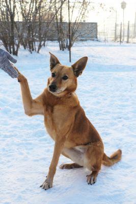 Взять собаку Николь из приюта Бирюлево