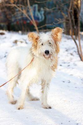 Собака Цыганка из приюта ищет дом Бирюлево