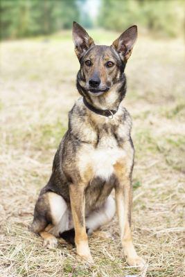 Взять собаку Лиса из приюта Бирюлево в добрые руки Бирюлево