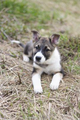 Взять щенка Мира из приюта Бирюлево в дар Бирюлево