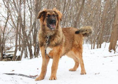 Взять собаку Тортик из приюта Бирюлево