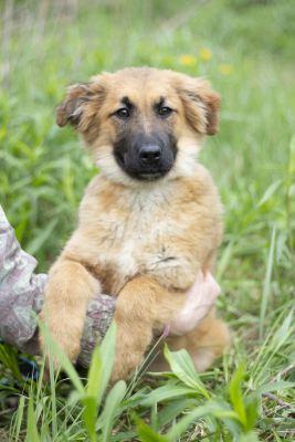 Взять щенка Мишель из приюта Бирюлево в дар Бирюлево