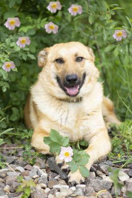 Взять собаку Элли из приюта в добрые руки Бирюлево