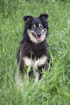 Взять собаку Лекси из приюта в добрые руки Бирюлево