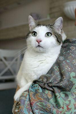 Взять кота Микс из приюта в добрые руки Бирюлево