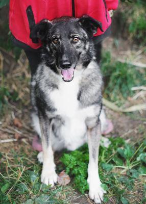 Взять собаку Лаки из приюта в добрые руки Бирюлево