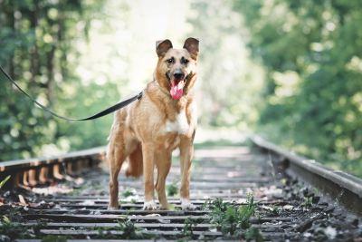 Собака Кима из приюта ищет дом Бирюлево