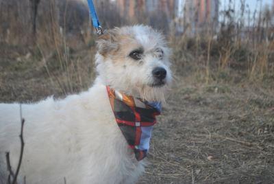 Собака Снежана из приюта нашла дом Бирюлево