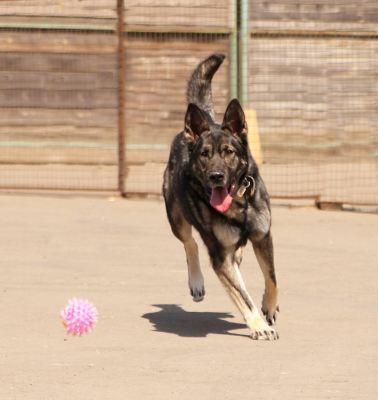 Собака Лорд из приюта нашла дом Бирюлево