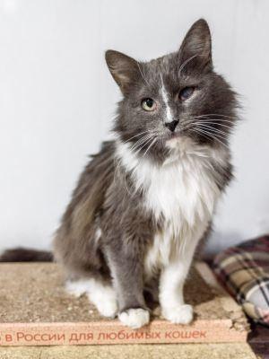 Взять кота Мартин в добрые руки из приюта Бирюлево Бирюлево