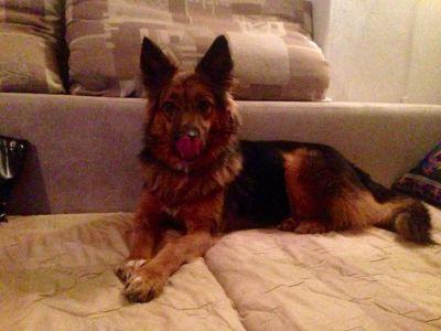 Собака Маруся из приюта нашла дом Бирюлево