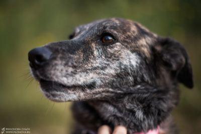 Собака из приюта Мэлори нашла дом Бирюлево