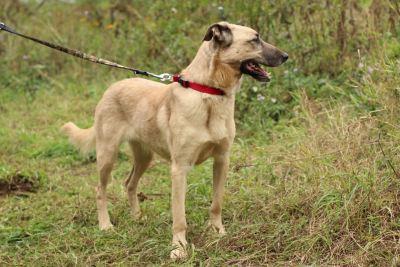 Собака Мира из приюта нашла дом Бирюлево