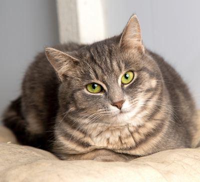 Взять кошку Нелли из приюта Бирюлево в дар Бирюлево